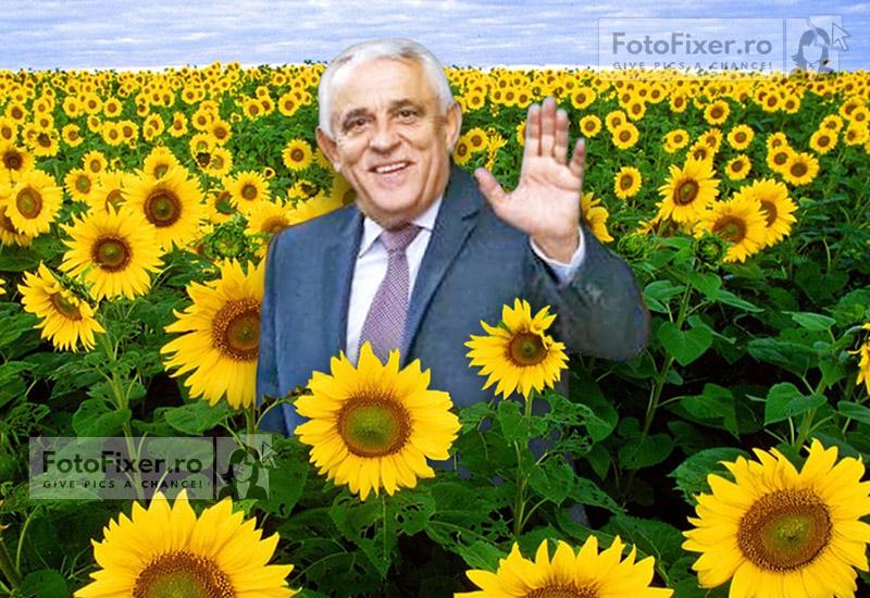 Daea in floarea soarelui - Trucaje foto – portofoliu - FotoFixer