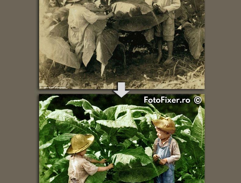Fotografie copii 4 ani si 6 ani pe plantatie tutun colorizare fotofixer orizonta 790x600 - Restaurare fotografii vechi - FotoFixer