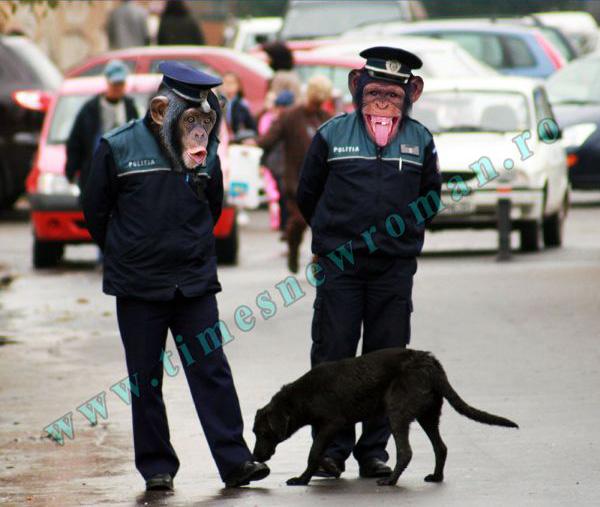 politistii sunt niste maimute - Trucaje foto – portofoliu - FotoFixer