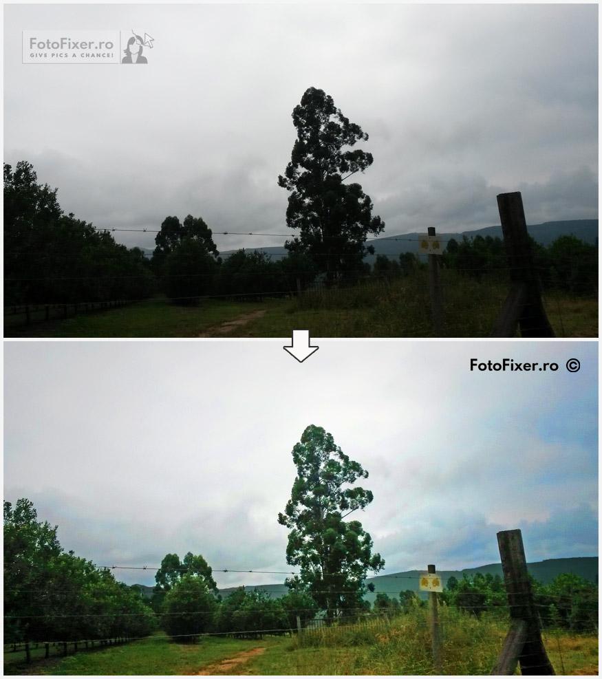 retu  are fotografie digital   copac editare foto postprocesare luminare editare fotofixer - Exemple retusare foto digitale | fotografii retusate | poze retusate - FotoFixer