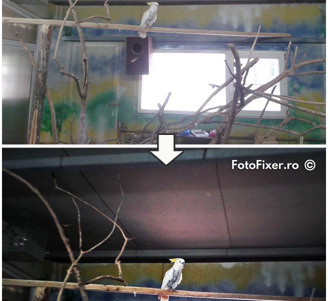 retu  are fotografie digital   papagal editare foto postprocesare 655x600 - Retușare fotografii digitale - FotoFixer