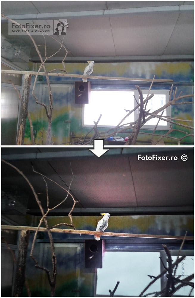 retu  are fotografie digital   papagal editare foto postprocesare - Exemple retusare foto digitale | fotografii retusate | poze retusate - FotoFixer