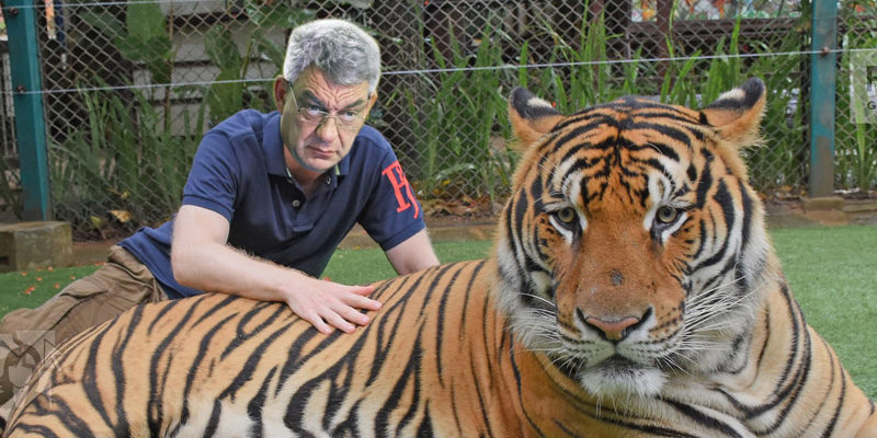 tudose si tigrul 12 800x400 - Trucaje foto – portofoliu - FotoFixer